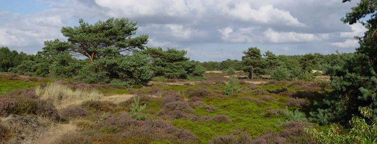 Omgeving Drents-Friese Wold